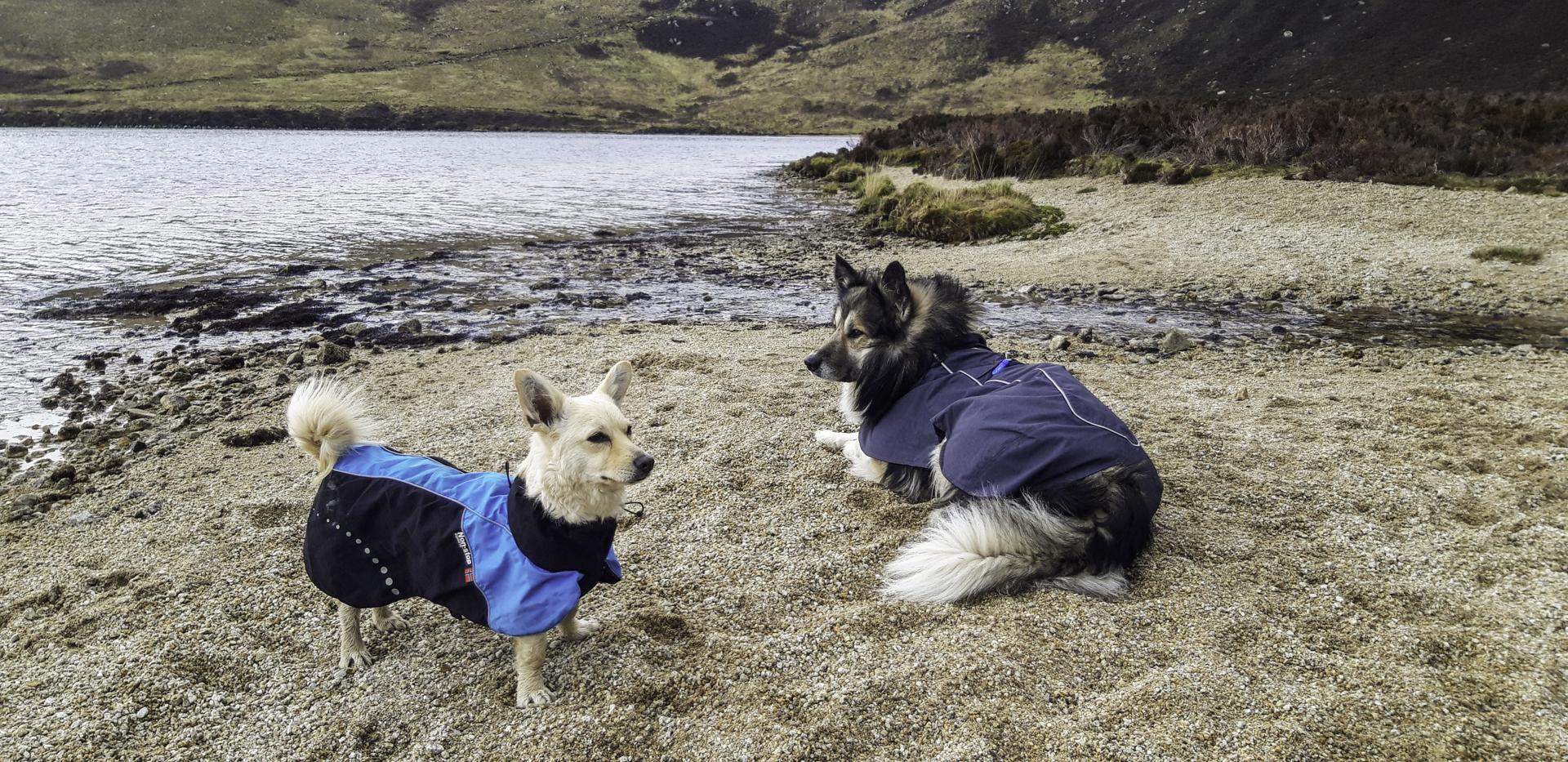 Reis met je hond door Schotland