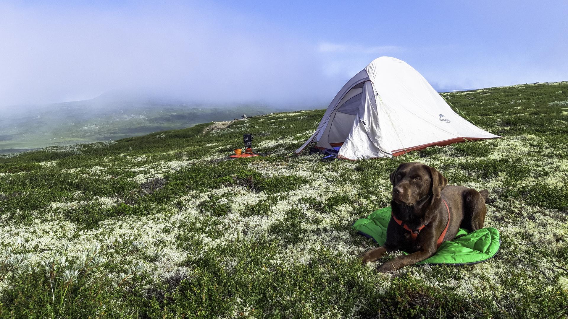 Reis met je hond door Noorwegen